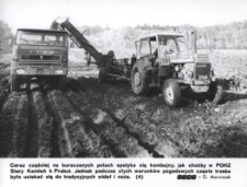 Stary Kamień k. Prabut – zbiór buraków