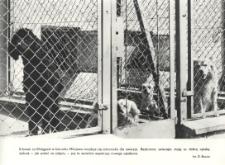 Schronisko dla zwierząt w Elblągu
