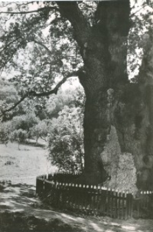 Kadyny - widokówka nr 2