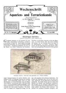 Wochenschrift für Aquarien und Terrarienkunde, 6. Jg. 1909, Nr. 24.