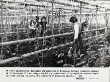 Szklarnia Zakładu Ogrodniczego w Gronowie Górnym