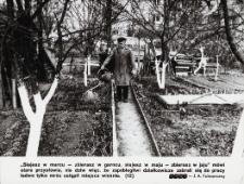 Śródmiejskie ogródki działkowe w Elblągu na wiosnę
