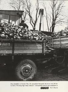 Skup buraków cukrowych w Starym Polu